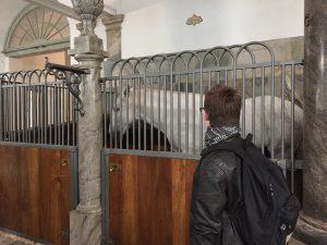 besøg i de Kongelige Stalde, hvor vi hilste på de fine heste og så GULDKARETEN.